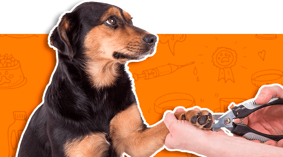 Corte de uñas para tu mascotas en Santiago, Chile | TusMascotas.cl