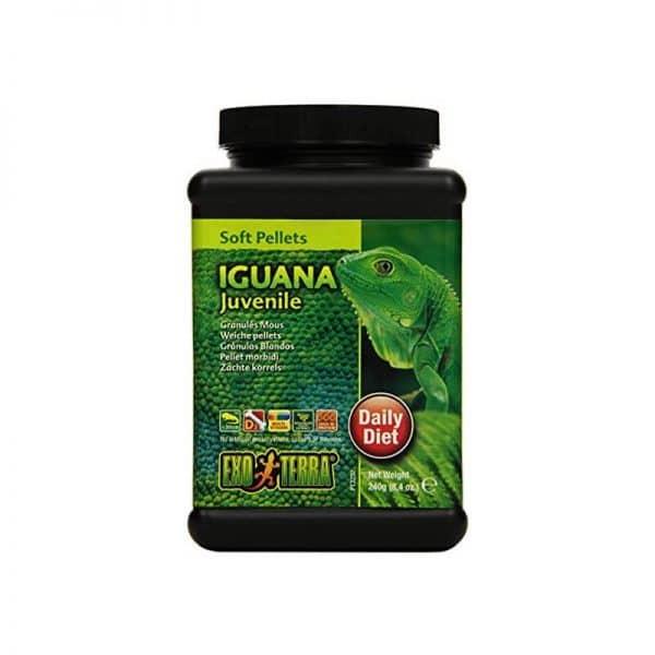 Exo Terra Iguana Juvenil
