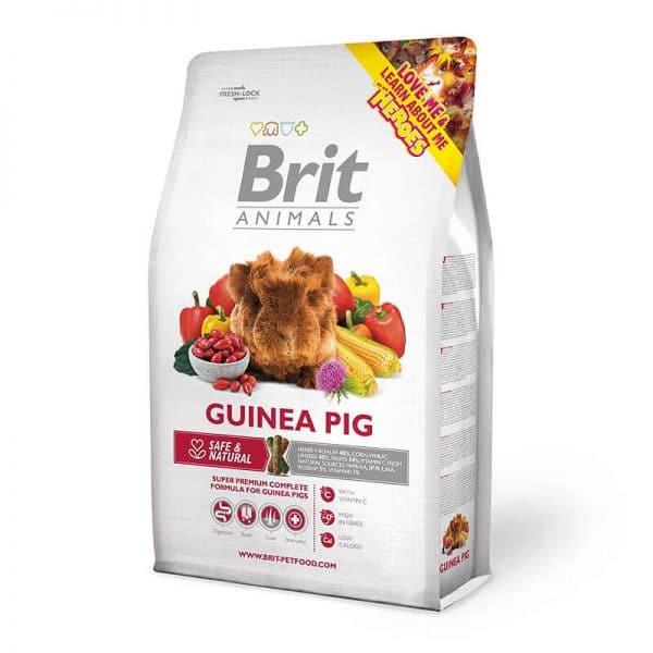 BRIT GUINEA PIG