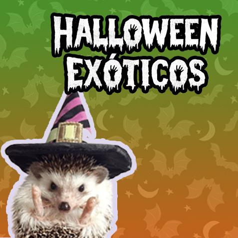 Halloween Exóticos (-50% de descuento)