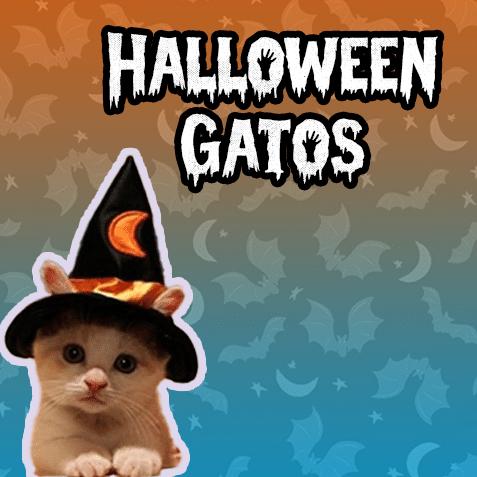 Halloween Gatos (-50% de descuento)