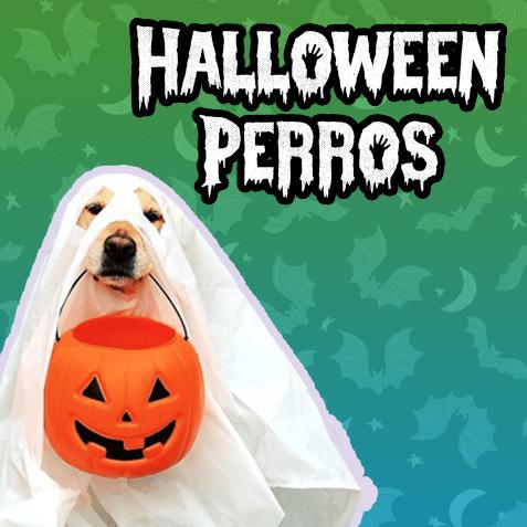 Halloween Perros (-50% de descuento)